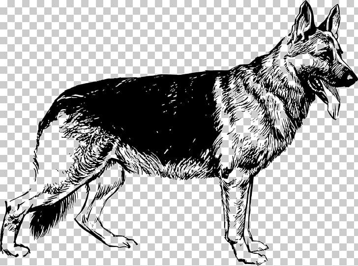German Shepherd Puppy Drawing , shepherd PNG clipart.