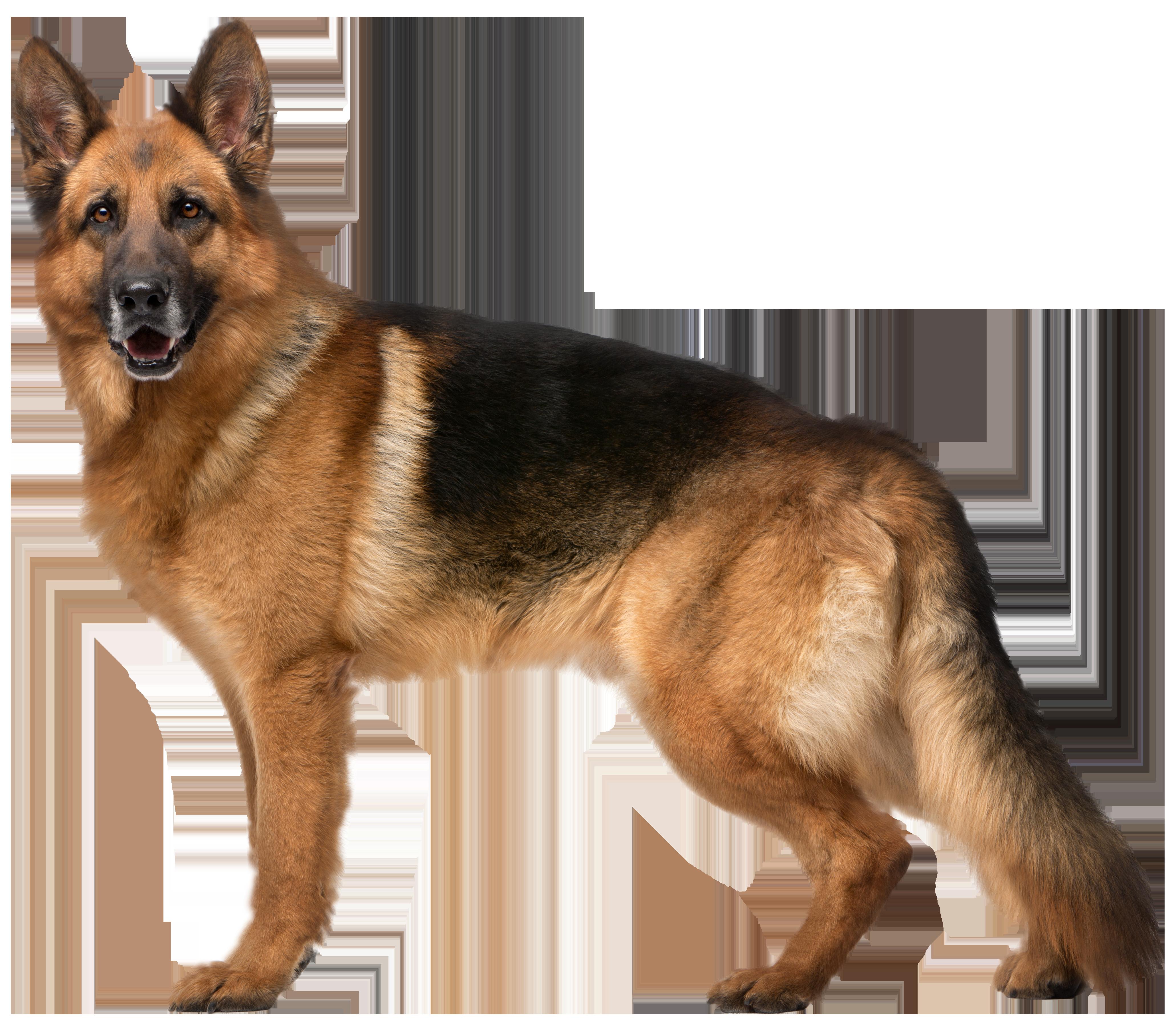 German Shepherd Dog PNG Clip Art.