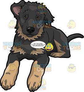 A Cute German Shepherd Puppy.