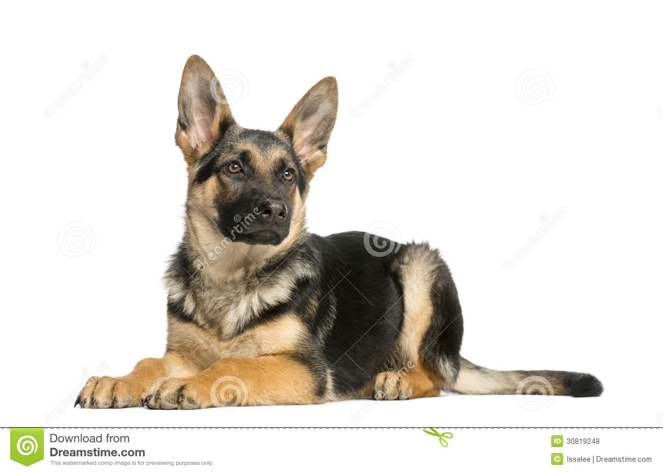 German Shepherd Laying Down Clipart.
