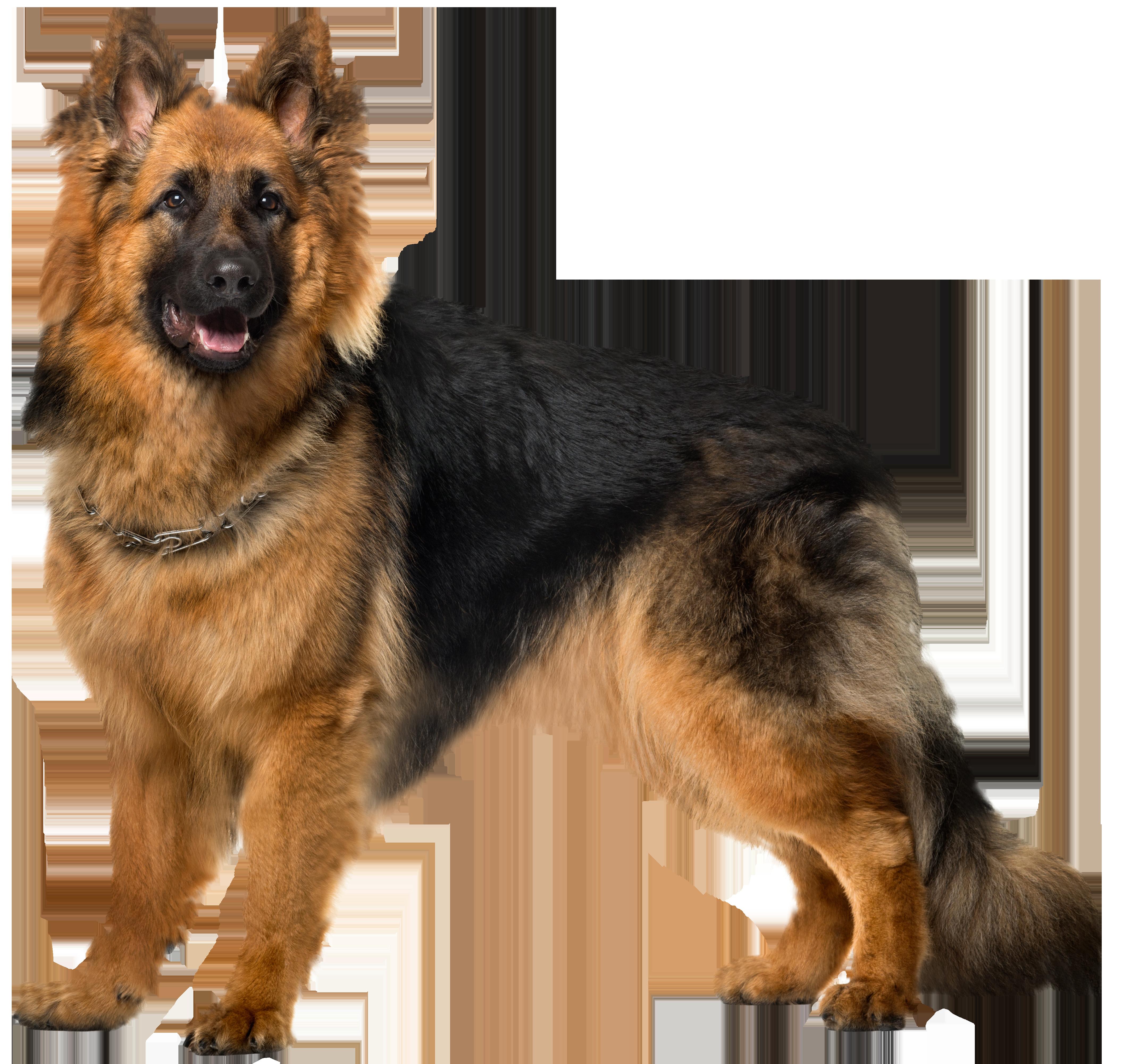 Dog German Shepherd PNG Clip Art.