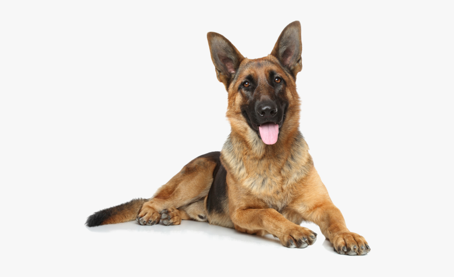 German Shepherd Png, Download Png Image With Transparent.