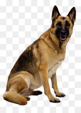 German Shepherd PNG.
