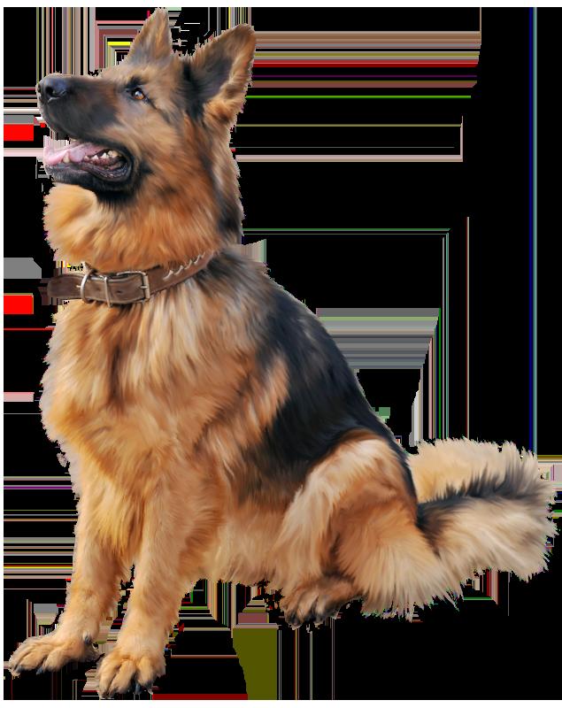 German Shepherd Dog PNG Clipart.