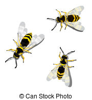 German wasp Illustrations and Clipart. 9 German wasp royalty free.