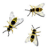 Wasps Stock Illustrations.