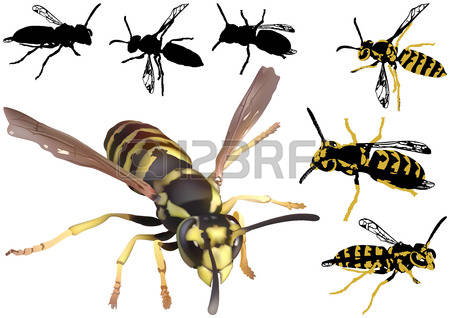 1,199 Silhouette Wasp Stock Vector Illustration And Royalty Free.