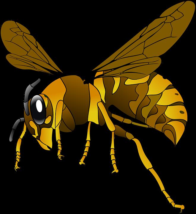 Free photo Female Vespula Germanica German Wasp Wasp Worker.
