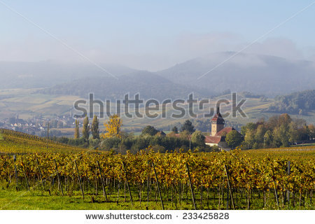 German Wine Stock Photos, Royalty.
