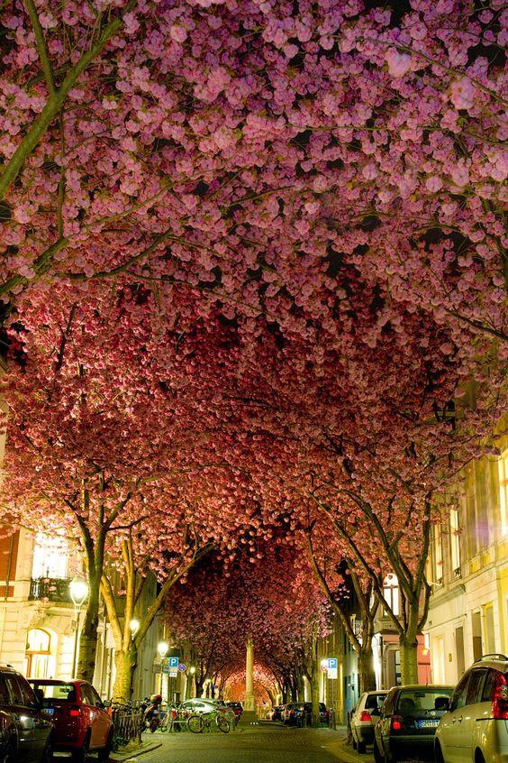 2. Street in Bonn, Germany.