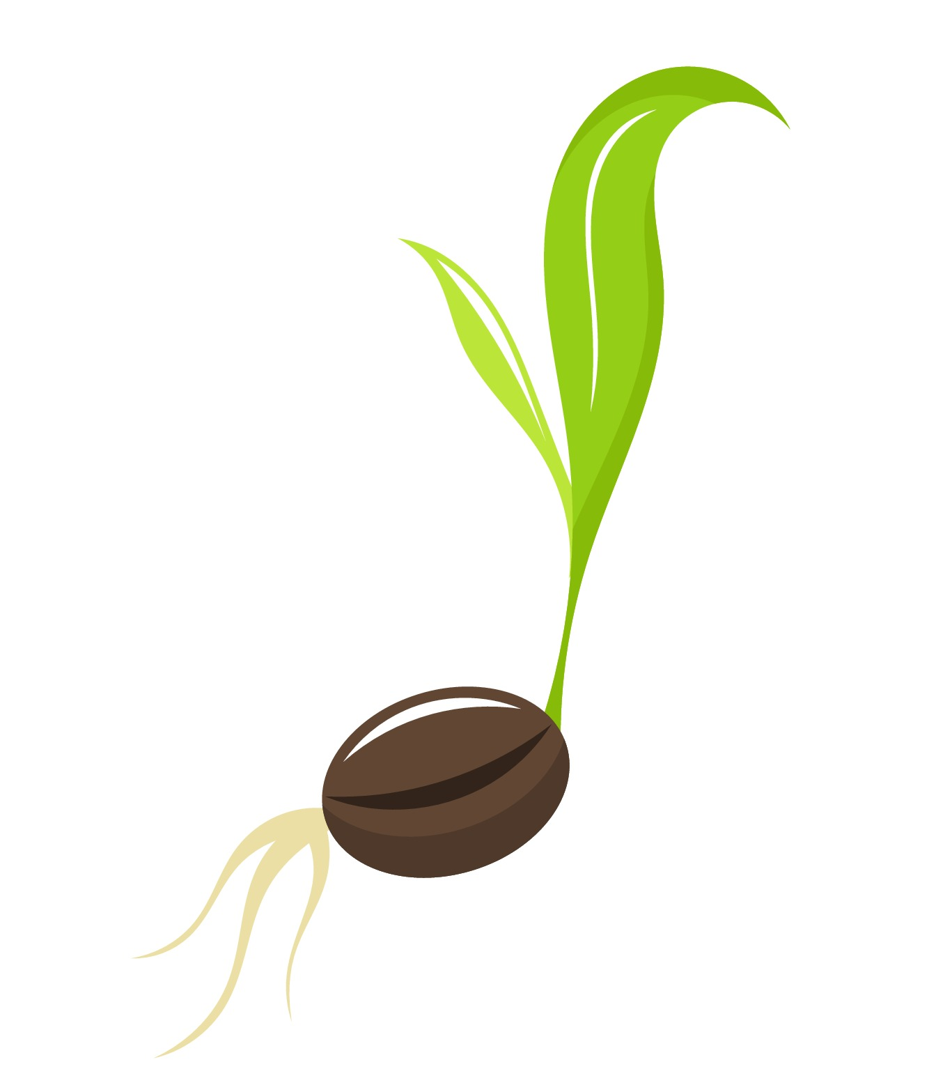 Seed clipart - Clipground