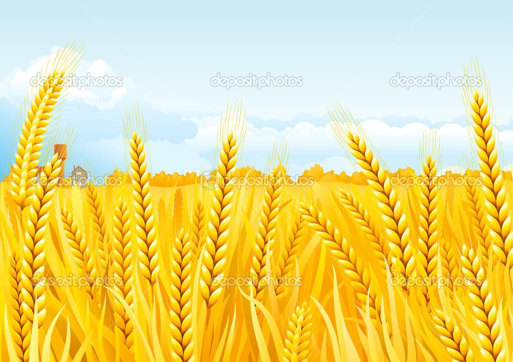 Grain fields — Stock Vector © song_mi #6847801.