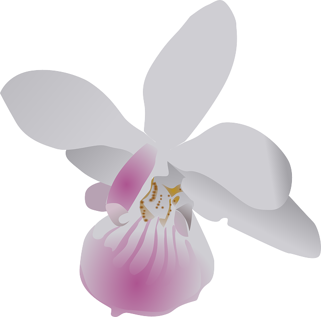 Free pictures ORCHID.