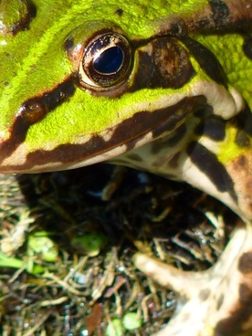 The frog with sunglasses free stock photos download (292 Free.