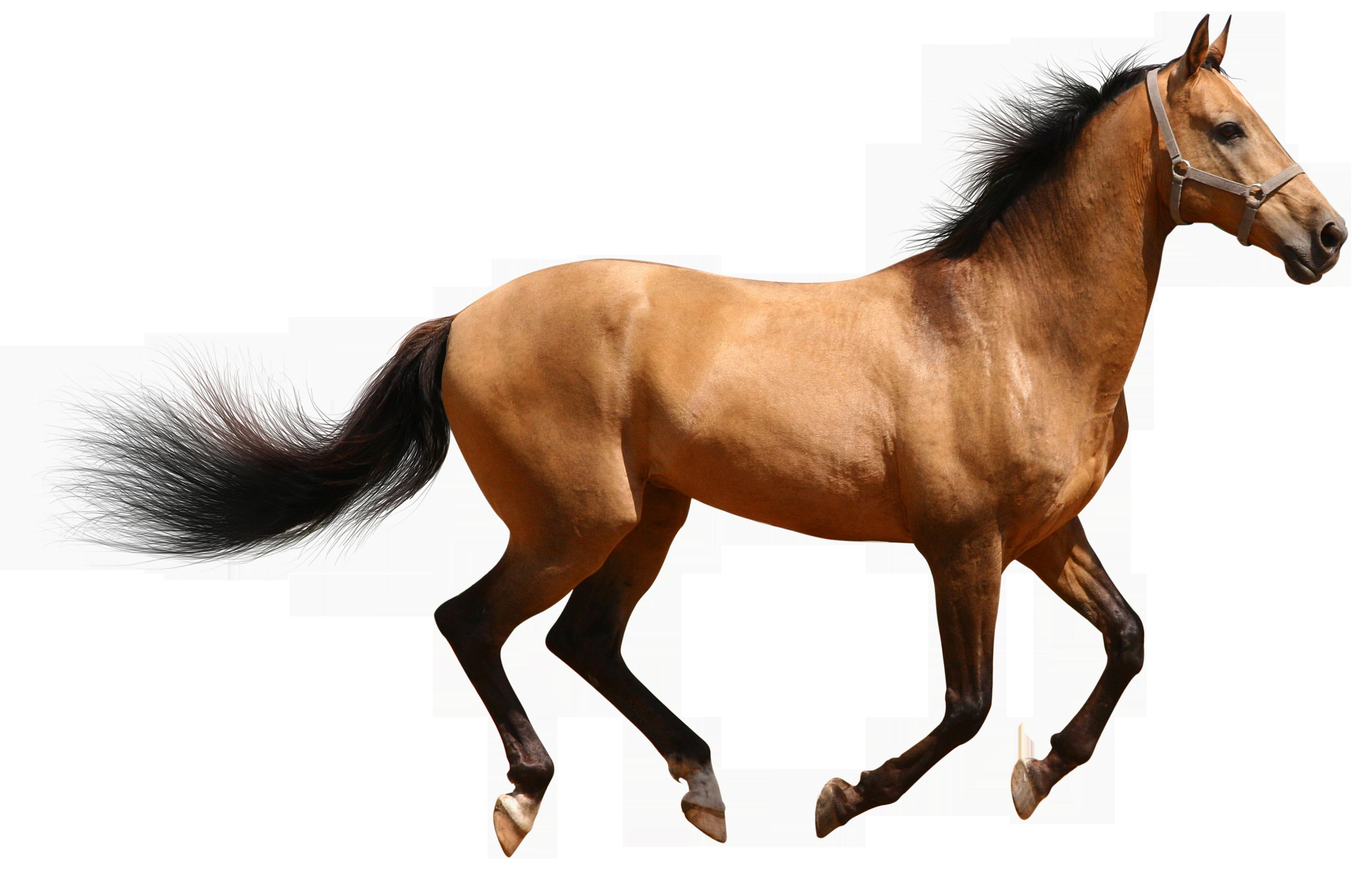 HQ Horse PNG Transparent Horse.PNG Images..