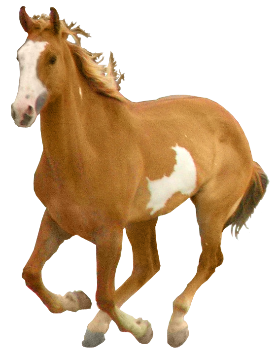 Horse png image, free download picture.