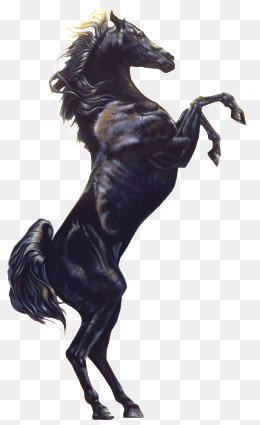 Horse PNG Images, Download 3,056 Horse PNG Resources with.