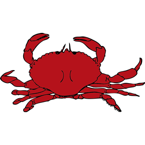 Gallery For > Ghost Crab Clipart.