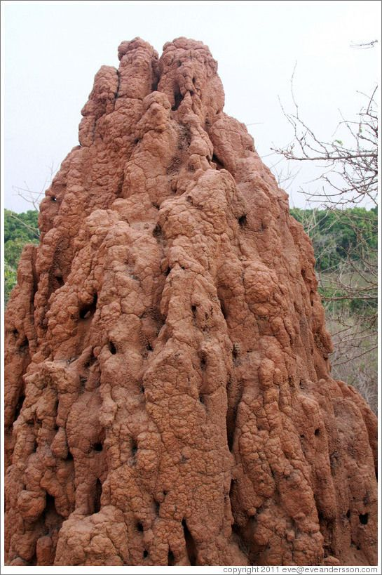 An African ant hill..
