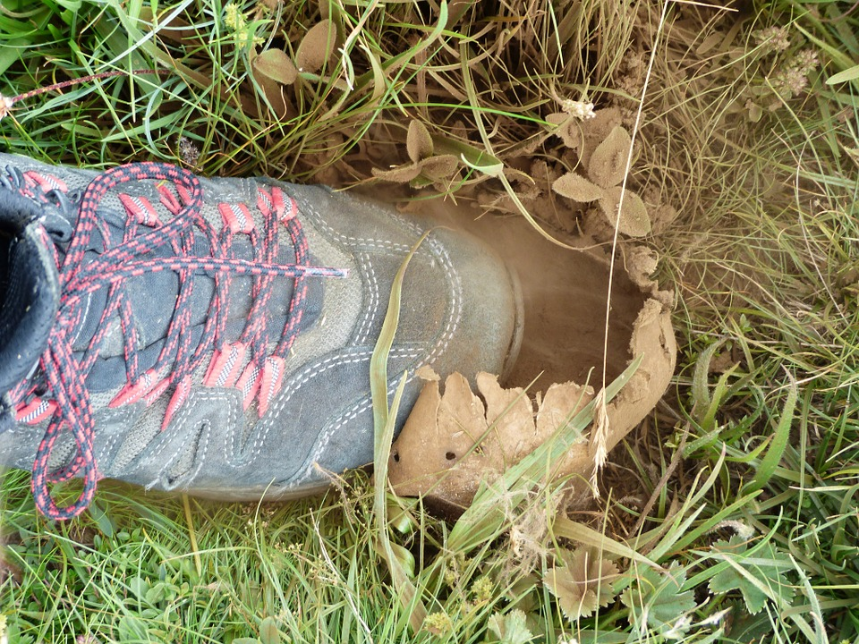Free photo Crush Mushroom Spores Bovist Mountain Shoe Dust.