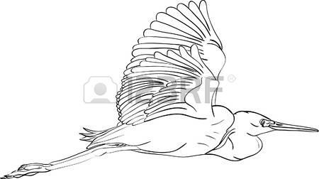 162 White Egret Stock Vector Illustration And Royalty Free White.