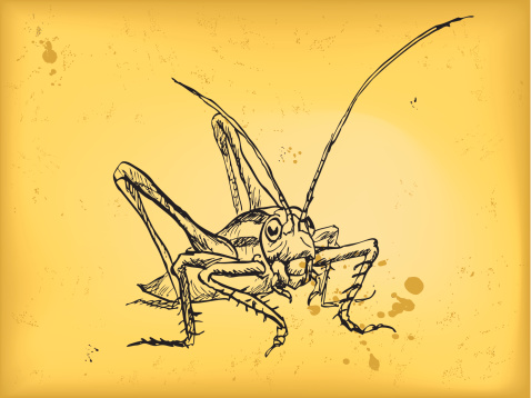 Giant Grasshopper Clip Art, Vector Images & Illustrations.