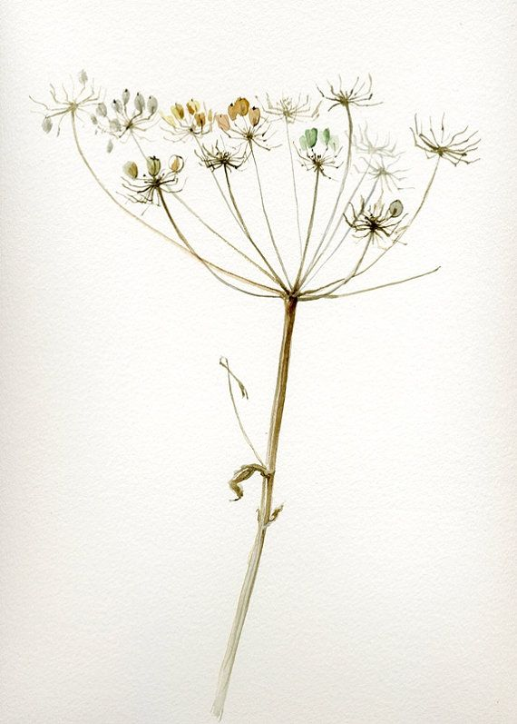 1000+ images about berenklauw / hogweed on Pinterest.