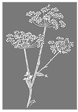 Giant Hogweed Queen Anne's Lace Stencil.