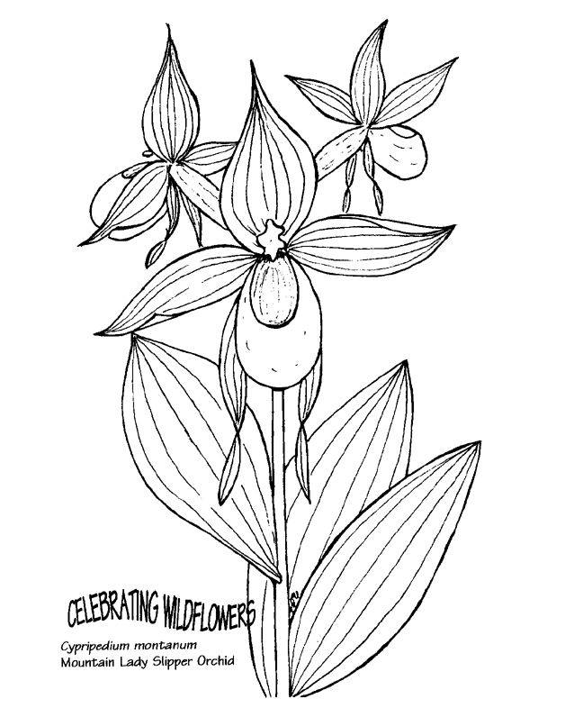 Pink lady slipper clipart 20 free Cliparts | Download ...