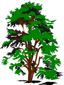 Redwood clipart.