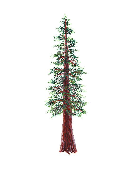 1000+ images about Redwood Tree tattoos and drawings on Pinterest.