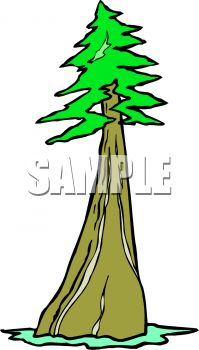 redwood forest clipart #5