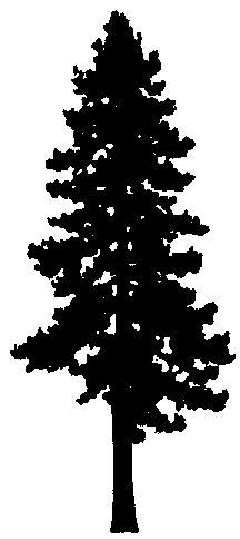 Redwoods Silhouette.