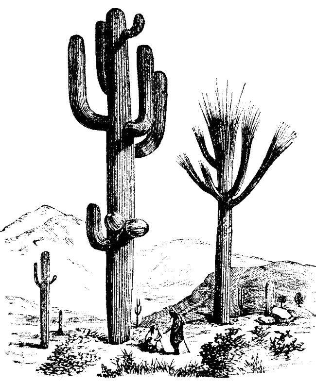 Saguaro cactus clip art.