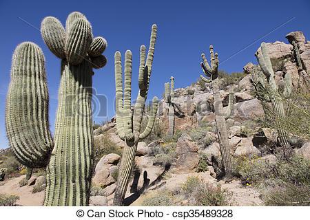 Giant saguaro clipart #12
