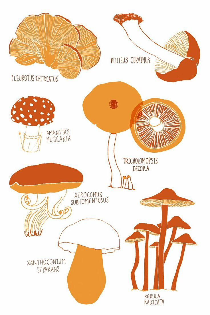 1000+ images about I like a fungi on Pinterest.