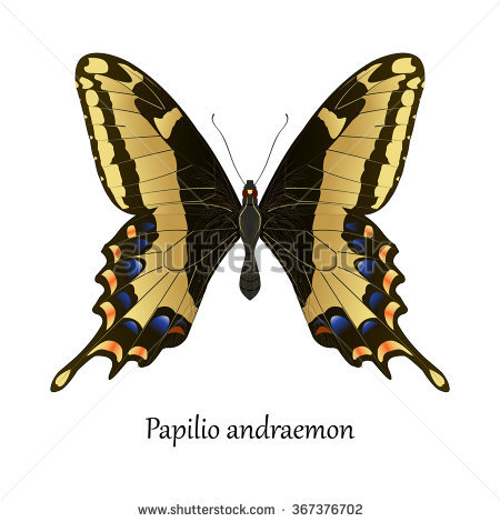 Swallowtail or clipart 20 free