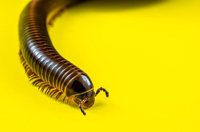 Free photo Arthropod Centipedes Myriapoda Millipedes.