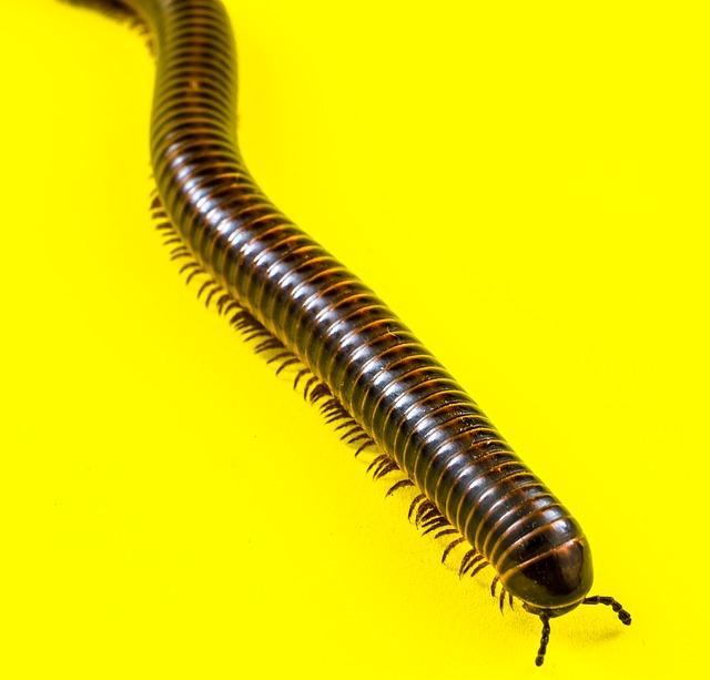 Free photo Macro Nature Centipede Millipede Sea Creature.