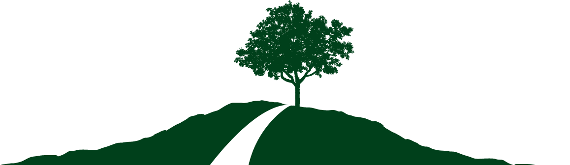 THUJA, Green Giant Arborvitae.