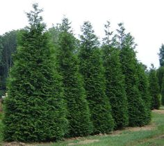 Privacy Trees: These 4 Grow the Fastest.