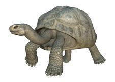 Giant Tortoise Stock Illustrations.