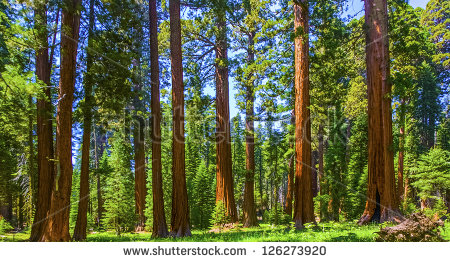 Huge Tree Stock Photos, Royalty.
