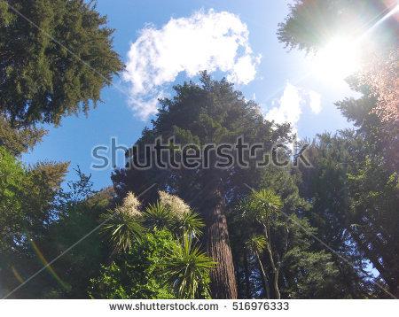Looking Up At Tree Stock Photos, Royalty.