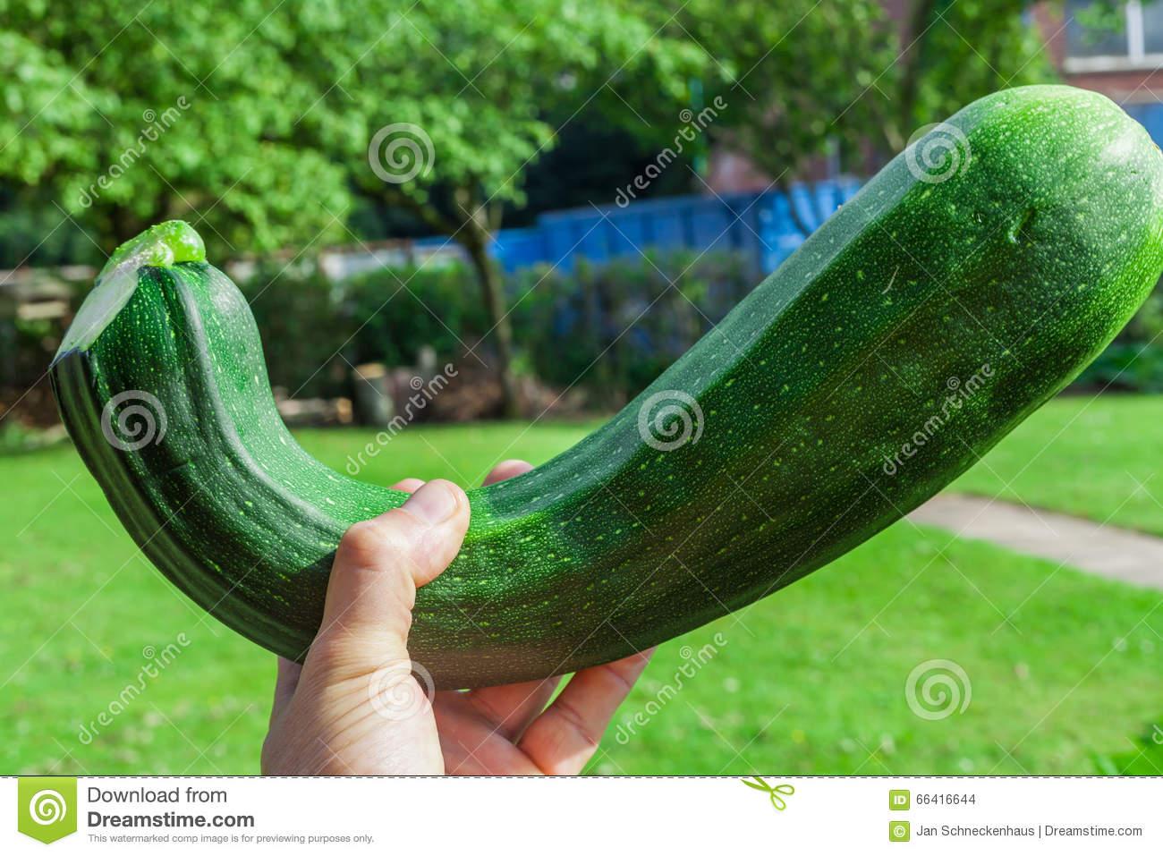 Giant Zucchini Stock Photo.