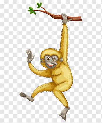 Gibbon cutout PNG & clipart images.