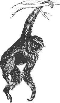 Free Gibbon Clipart, 1 page of Public Domain Clip Art.