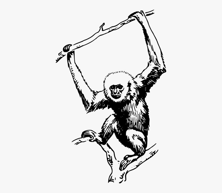 Gibbon Black And White , Transparent Cartoon, Free Cliparts.