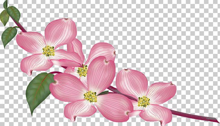 GIF JPEG Gfycat PNG, Clipart, Blossom, Branch, Cherry.