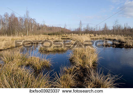 "Picture of ""Renatured moor area where peat was cut, Grosses Moor."